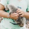 Animal Encounters // Top 5 Animal Encounters on Land