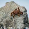 Swell Sculpture Festival