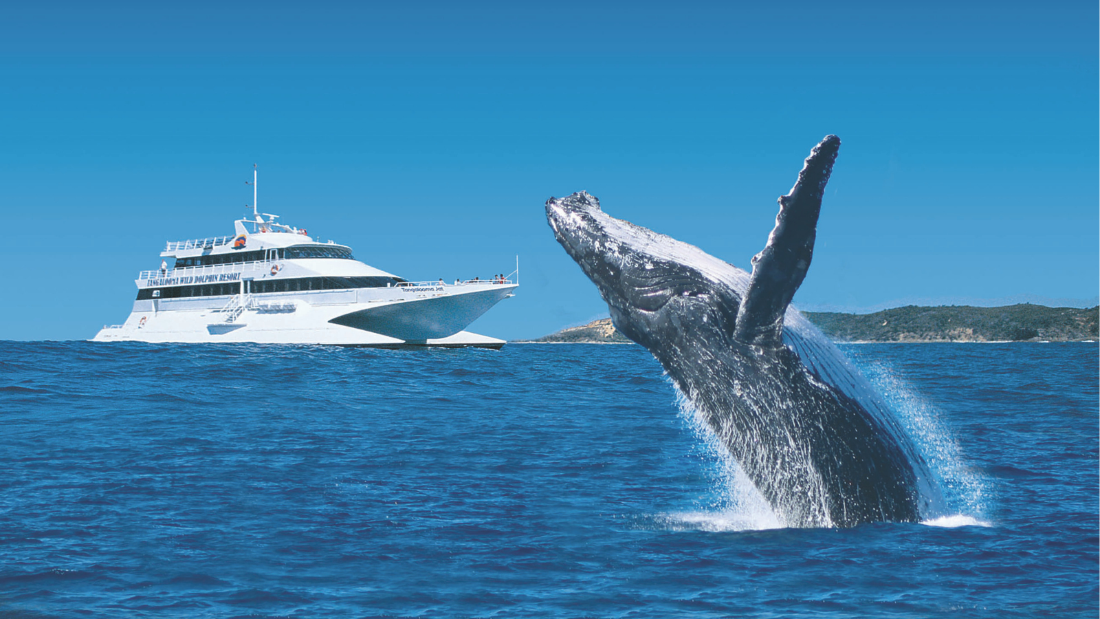 WIN // Tangalooma Island Resort Day Cruise