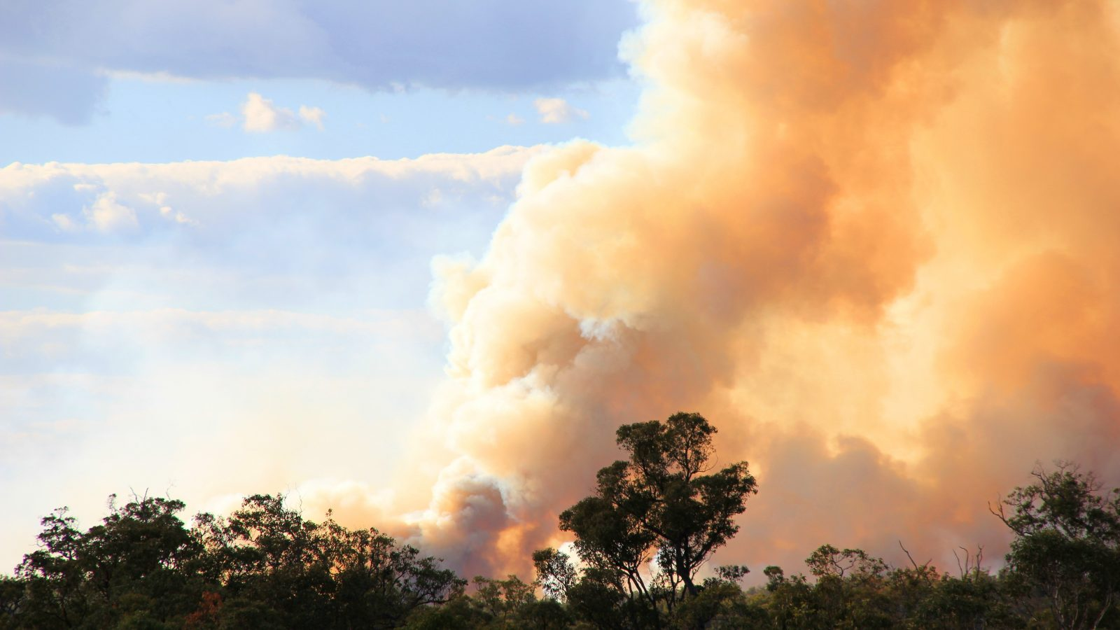 How your family can help bushfire-affected Aussies